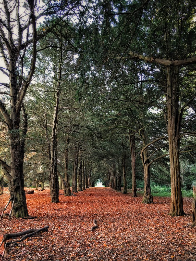 parco di Ickworth house