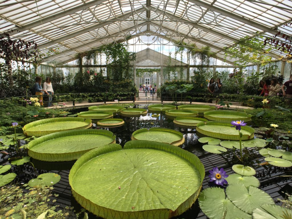 Waterlily house
